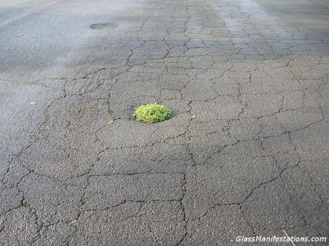 grass-in-pothole